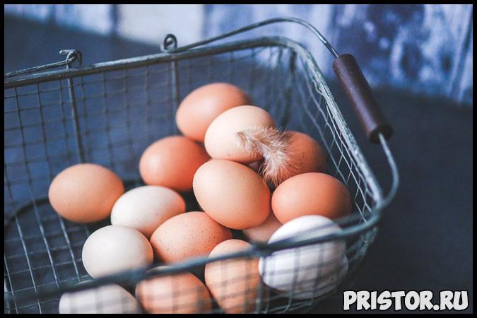 Чем отличаются коричневые яйца от белых В чем разница 2