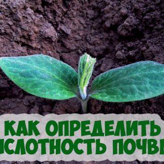 Как определить кислотность почвы самостоятельно на своем участке 1