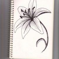 Картинки для срисовки цветы, цветочки - красивые и прикольные 4