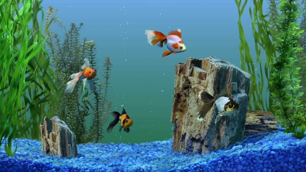 Картинки на рабочий стол аквариум - красивые и прикольные 13