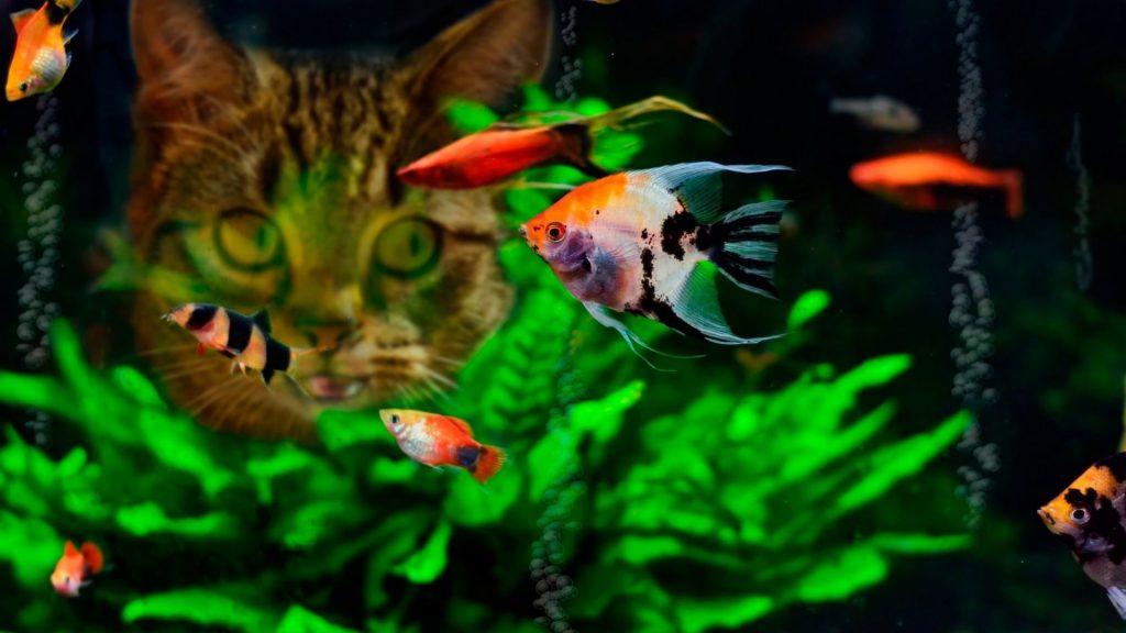 Картинки на рабочий стол аквариум - красивые и прикольные 5