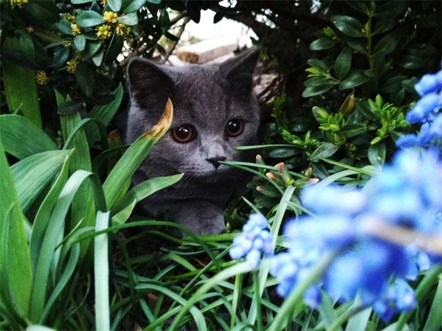 Красивые и прикольные фото кошек - лучшая подборка 13