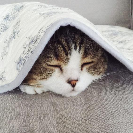 Красивые и прикольные фото кошек - лучшая подборка 14