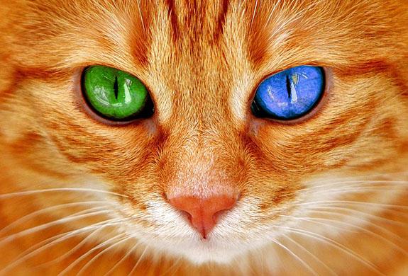 Красивые и прикольные фото кошек - лучшая подборка 16