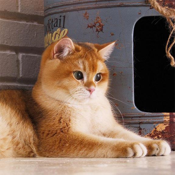 Красивые и прикольные фото кошек - лучшая подборка 17