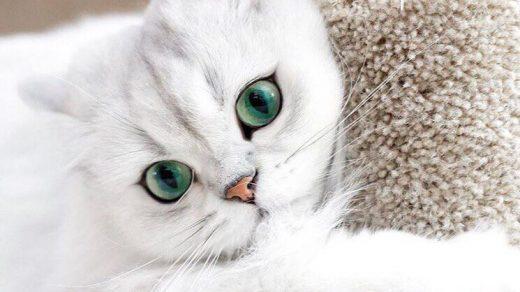 Красивые и прикольные фото кошек - лучшая подборка 18