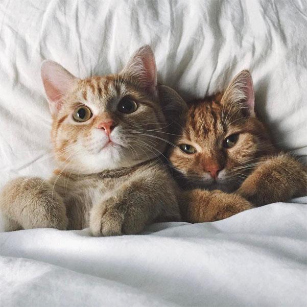 Красивые и прикольные фото кошек - лучшая подборка 20