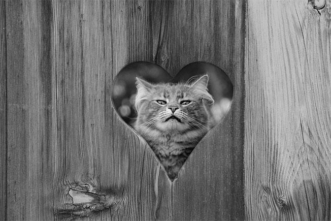 Красивые и прикольные фото кошек - лучшая подборка 21