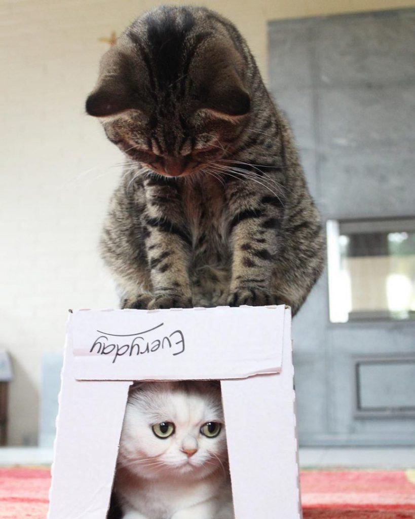 Красивые и прикольные фото кошек - лучшая подборка 6