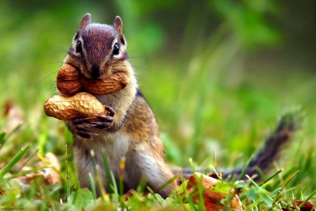 Красивые и удивительные картинки природы - прикольная коллекция 16