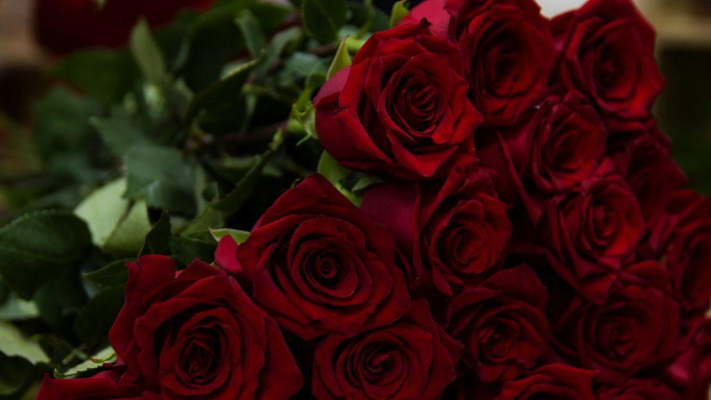 Красивые картинки роз на весь экран на рабочий стол - подборка 6