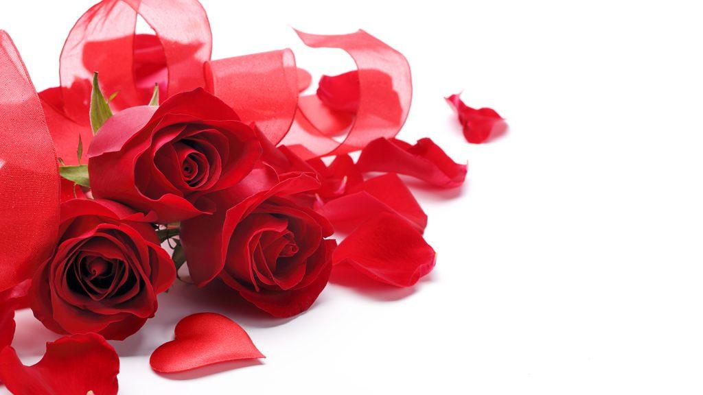 Красивые картинки роз на весь экран на рабочий стол - подборка 7