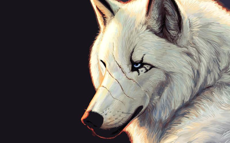 Прикольные и красивые арт картинки волка. Нарисованный волк, фэнтези 17