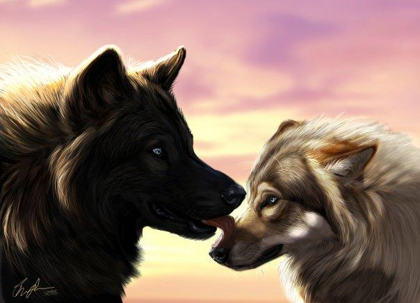 Прикольные и красивые арт картинки волка. Нарисованный волк, фэнтези 6