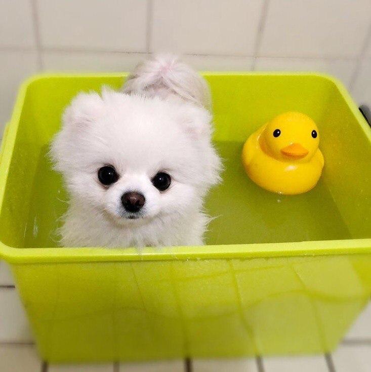 Смешные картинки про животных для детей - подборка изображений 7