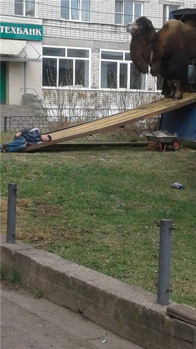 Это Россия, детка! - смешные и прикольные картинки 15