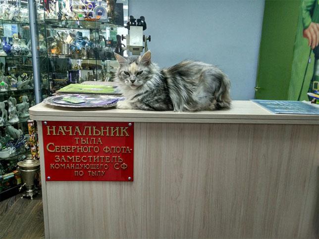 Это Россия, детка! - смешные и прикольные картинки 16