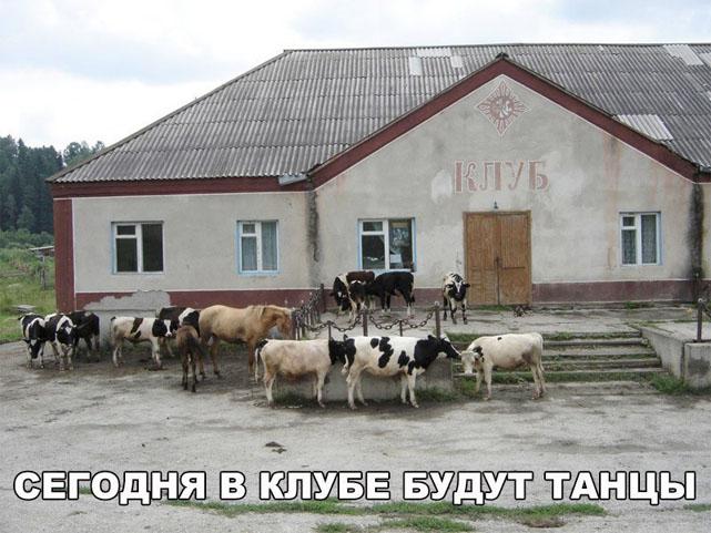 Это Россия, детка! - смешные и прикольные картинки 18