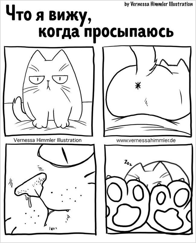 18 прикольных комиксов, в которых себя узнает каждый владелец кота - подборка 15