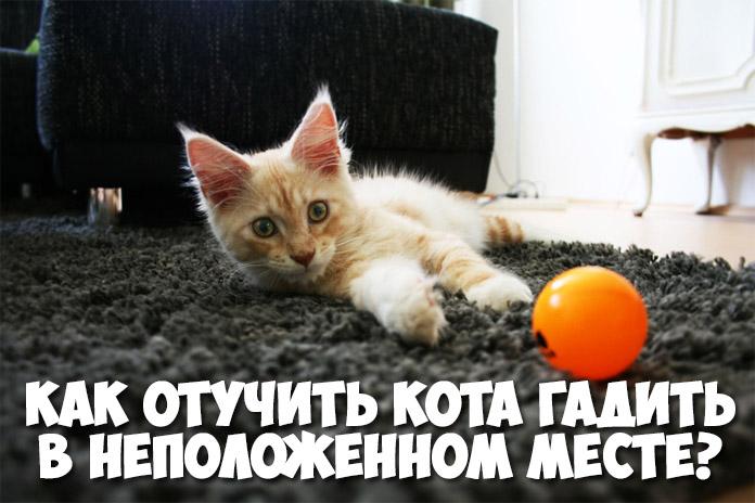 Как отучить кота гадить в неположенном месте - эффективные способы 1