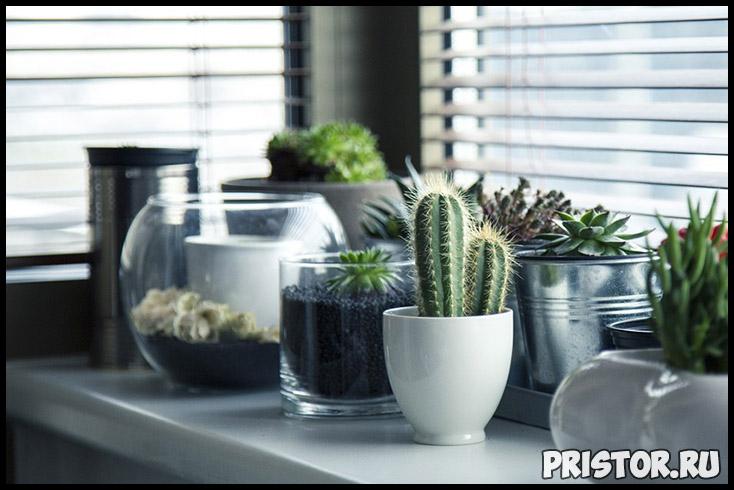Как правильно пересадить кактус в домашних условиях - важные советы 3