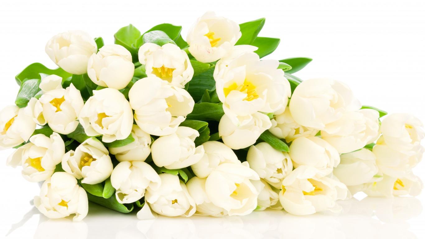 Красивые картинки на рабочий стол тюльпаны - подборка 10
