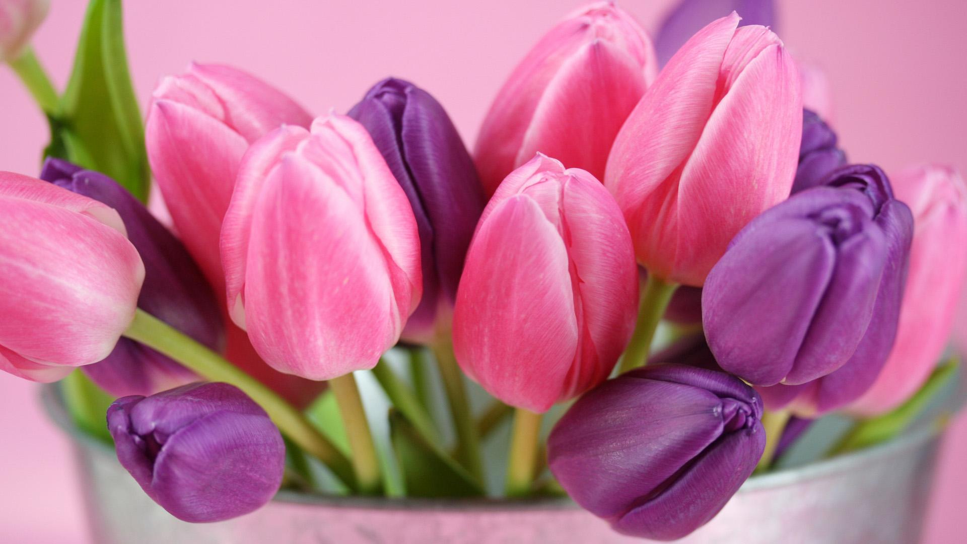 Красивые картинки на рабочий стол тюльпаны - подборка 16