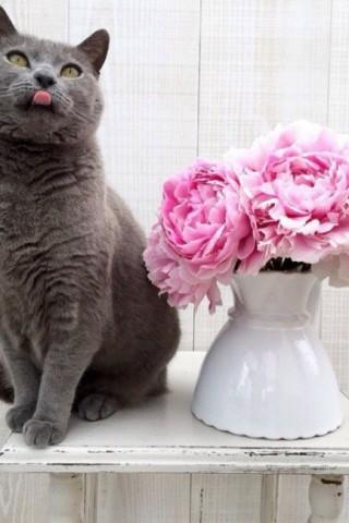 Красивые картинки на телефон котята и кошечки - подборка 14