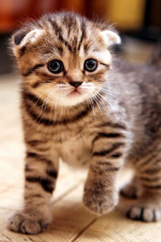 Красивые картинки на телефон котята и кошечки - подборка 4