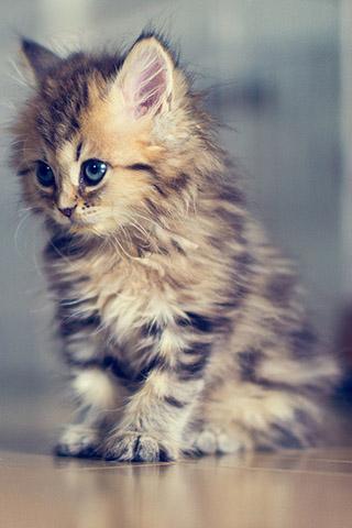 Красивые картинки на телефон котята и кошечки - подборка 6