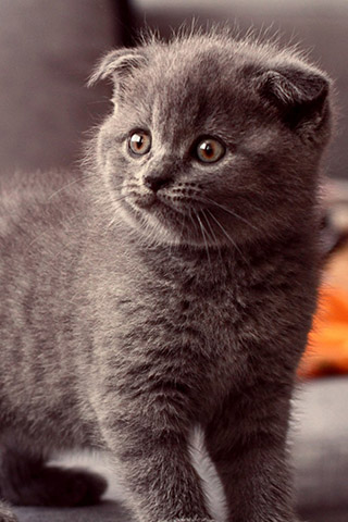 Красивые картинки на телефон котята и кошечки - подборка 9