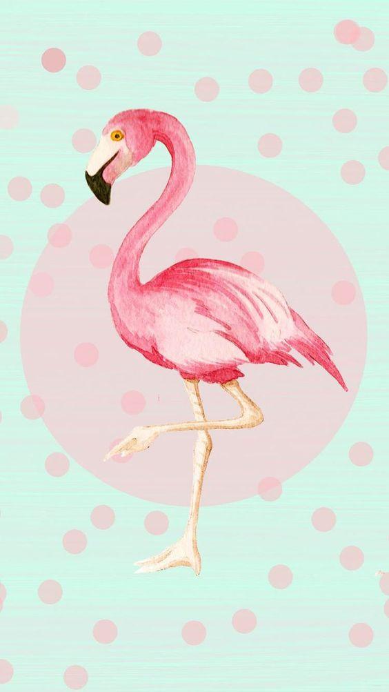 Аву стим, красивые открытки фламинго