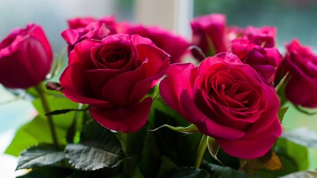 Красивые обои розы на рабочий стол - интересная коллекция 10
