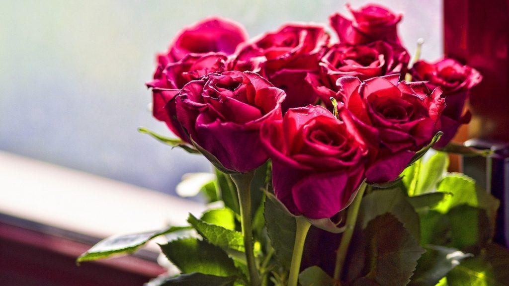 Красивые обои розы на рабочий стол - интересная коллекция 15