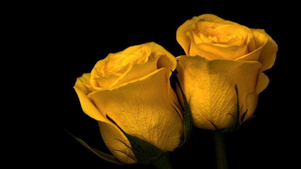 Красивые обои розы на рабочий стол - интересная коллекция 3
