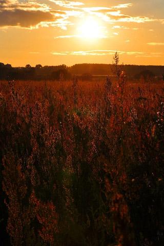 Крутые и красивые картинки на телефон закат, закат Солнца 17