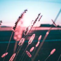 Невероятный и красивый закат Солнца летом - картинки и изображения 18