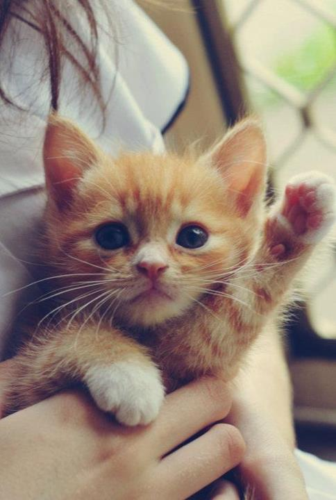 Прикольные и красивые картинки на аву кошки и котики - подборка 1