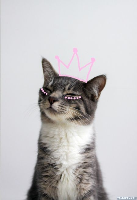 Прикольные и красивые картинки на аву кошки и котики - подборка 17