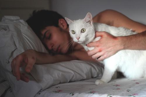 Прикольные и красивые картинки на аву кошки и котики - подборка 18