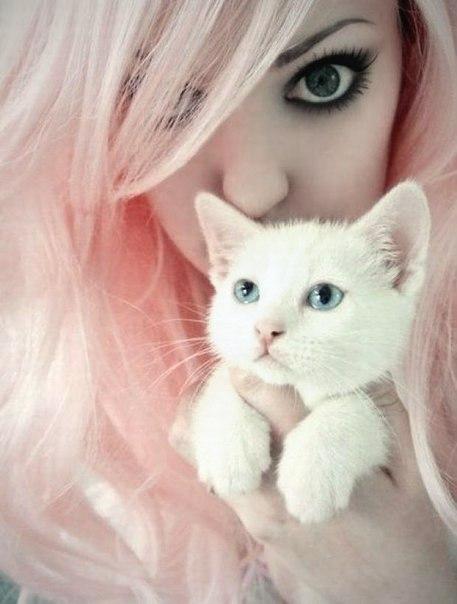 Прикольные и красивые картинки на аву кошки и котики - подборка 21