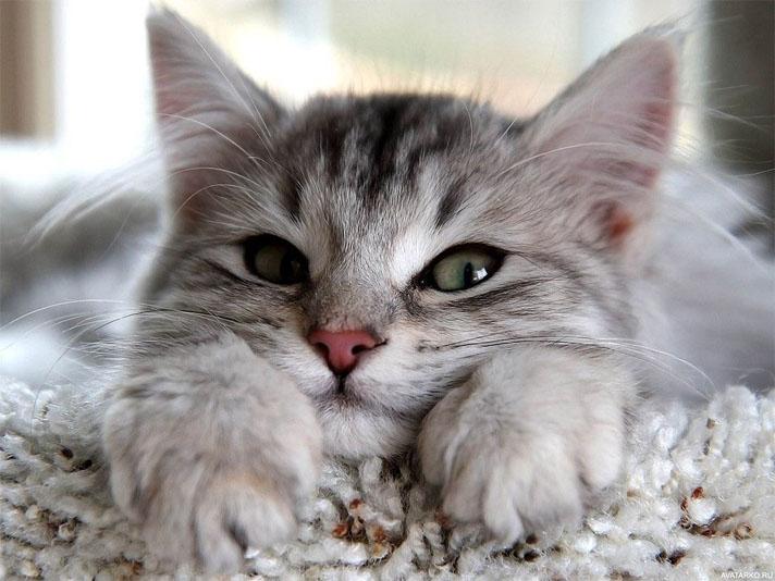 Прикольные и красивые картинки на аву кошки и котики - подборка 24