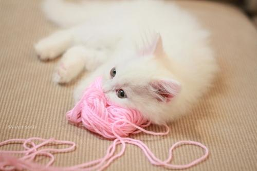 Прикольные и красивые картинки на аву кошки и котики - подборка 3