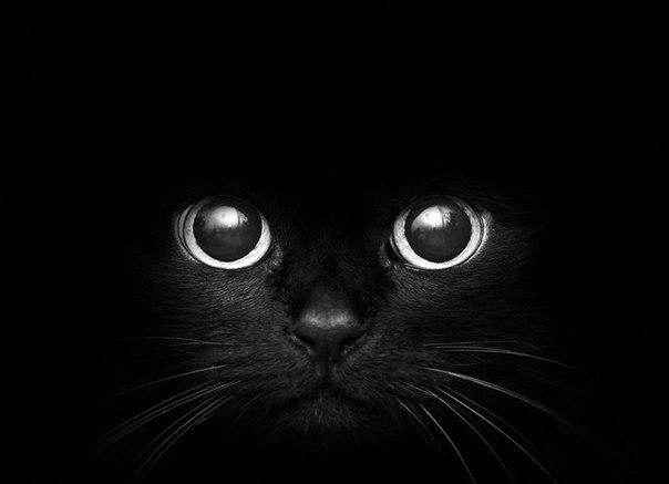 Прикольные и красивые картинки на аву кошки и котики - подборка 7