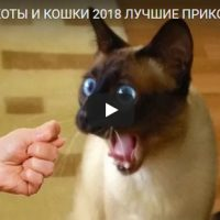 Смешные и прикольные видео про кошек - подборка за 2018 год
