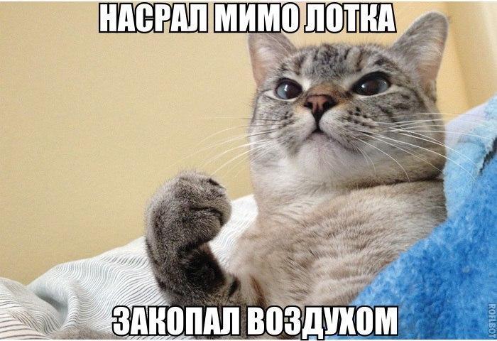 Смешные картинки про животных с надписями - веселая подборка №64 1