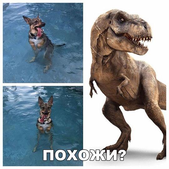 Смешные картинки про животных с надписями - веселая подборка №64 10