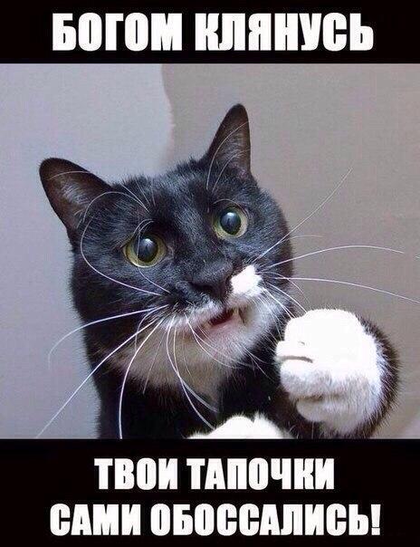 Смешные картинки про животных с надписями - веселая подборка №64 12