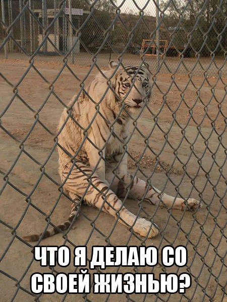 Смешные картинки про животных с надписями - веселая подборка №64 13