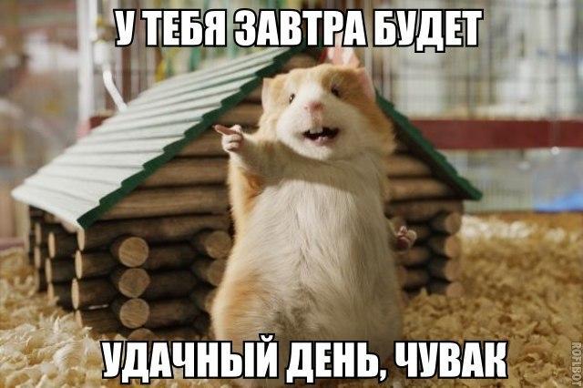 Смешные картинки про животных с надписями - веселая подборка №64 15